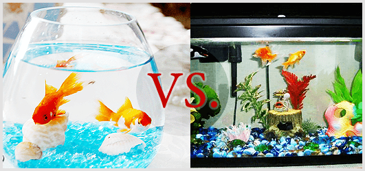 how to clean a small goldfish tank